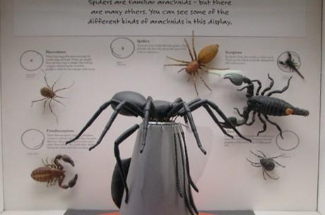 SpidersFeature