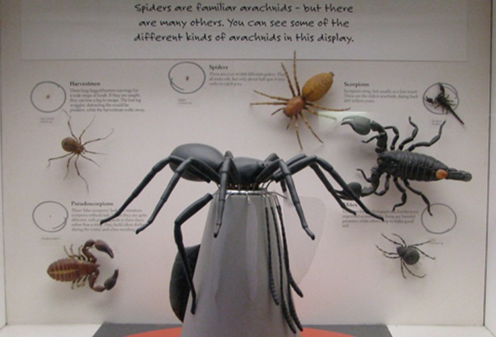 Spider Model, Natural History Museum